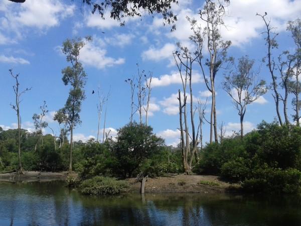 Ilha dos Macacos onde os animais circulam livremente