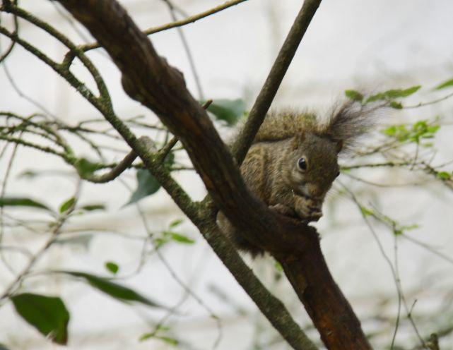 Os esquilos são mascotes de Monte Verde Foto: Eduardo Andreassi