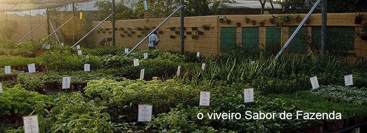 Viveiro do Sabor da Fazenda Foto: Divulgação