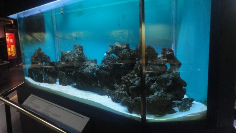 aquario com a moreia - cobra que vive no mar Foto: Vilma Alcantara