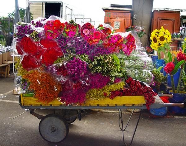 flores05-600x469
