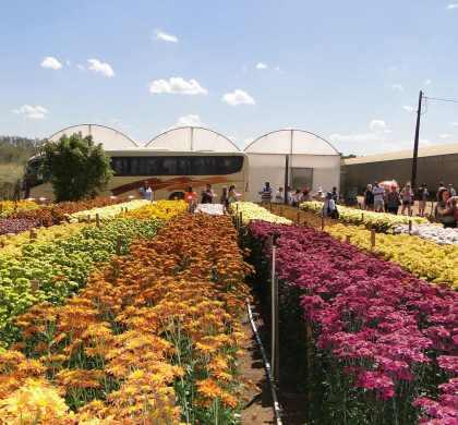 Participe do maior festival de flores e cores em Holambra: Expoflora