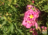 jardim de florença_18
