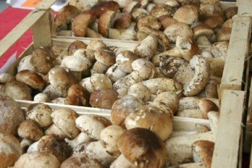 funghi porcini fresco