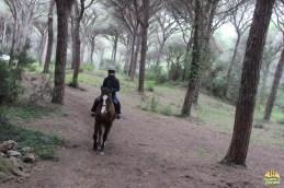 cavallo051
