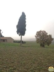 Valle D'Orcia_20