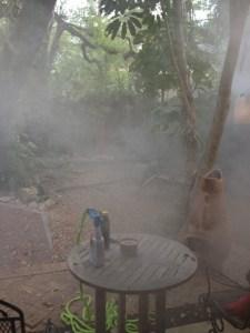 Mosquito fogging excitement