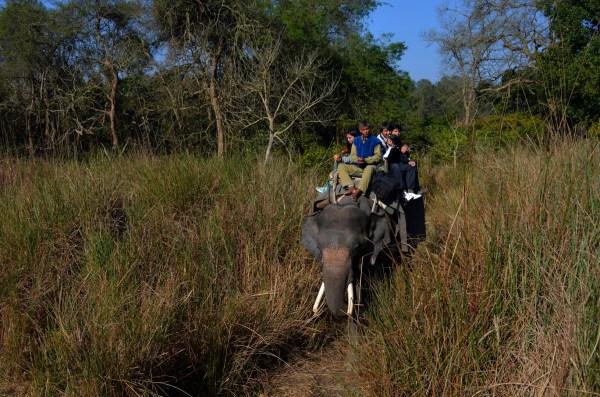 At Dudhwa National park... for the elephant safari... the terrain - grasslands