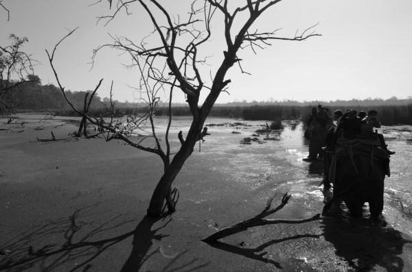 At Dudhwa National park... for the elephant safari... the terrain