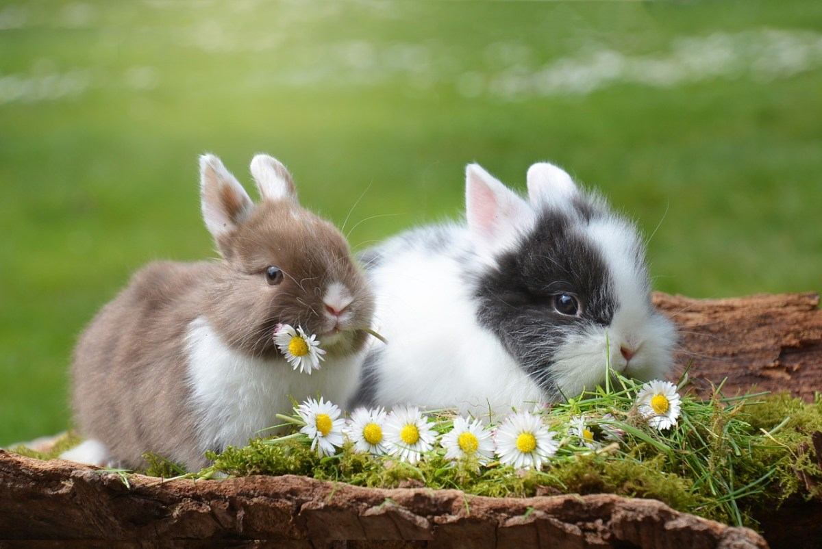 rabbit, easter, hare
