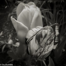 20120502-IMG_1717