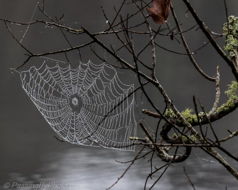 Spider Web in the Fog