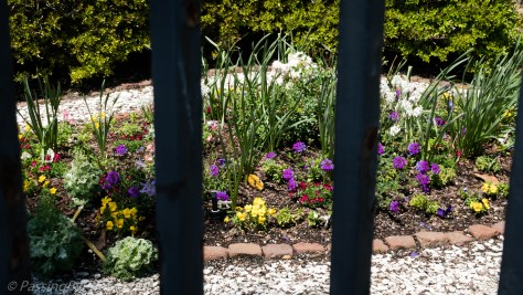Annuals through the fence