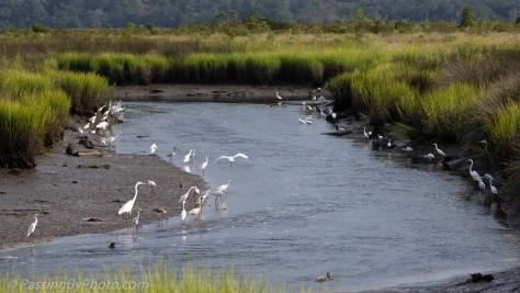 Wading Birds Lining the Shore