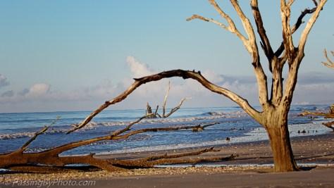 Incoming Tide, Boneyard Beach