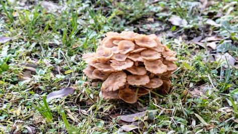 Ground Fungi