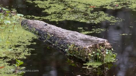 Dragonfly on Log