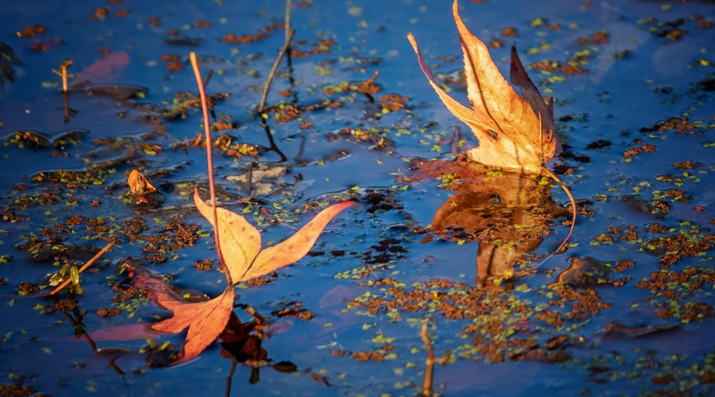 Two Leaves Standing On Pond