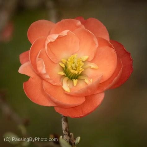Orange, Unknown Bloom