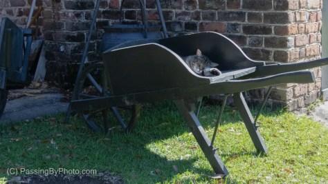 Barnyard Cat Snoozing in Wheelbarrow