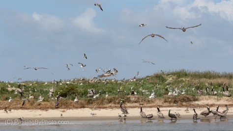 Bird Key Stono Heritage Preserve
