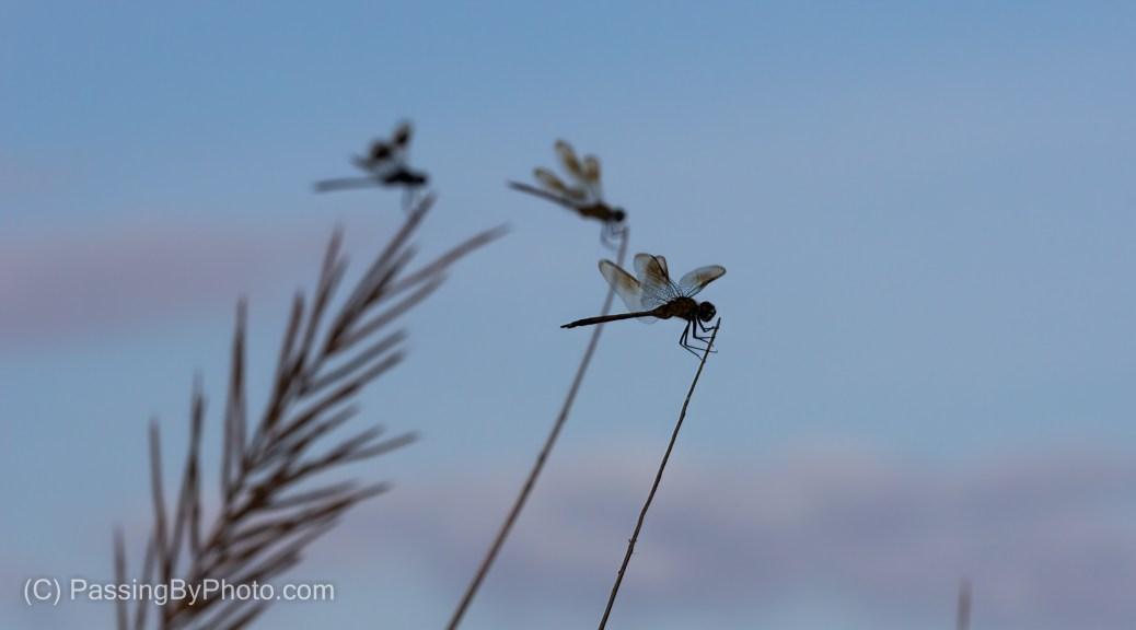 Dragonfly Trio