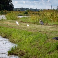 Bird Line Up On The Dike