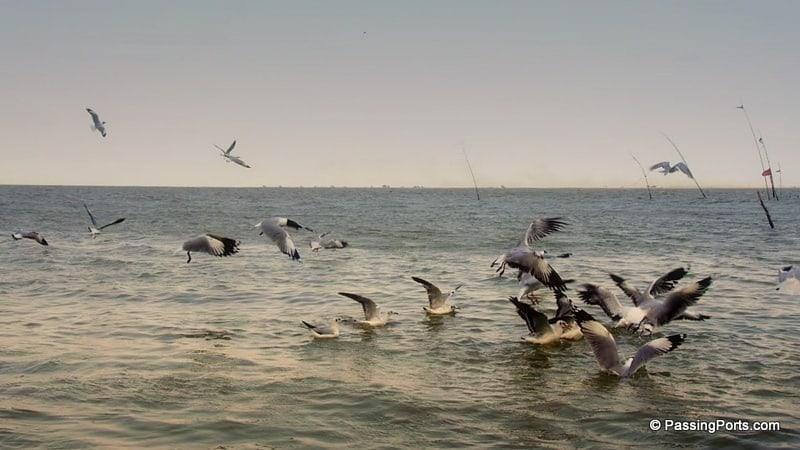 Bird watching in Chilika Lake