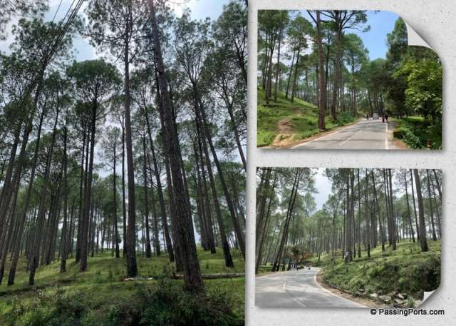 Ranikhet natural beauty