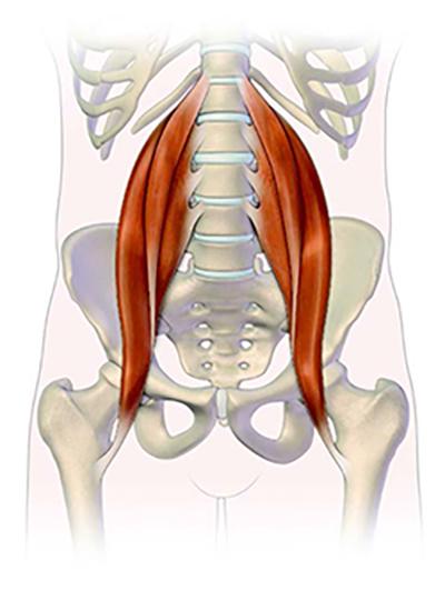Qu'est-ce que la voile muscle?