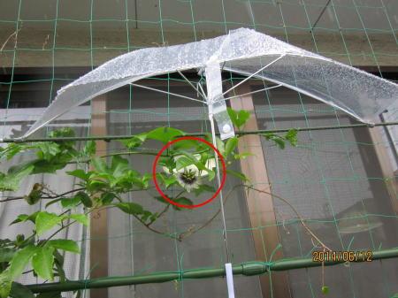 雨の開花半ブレラ設置