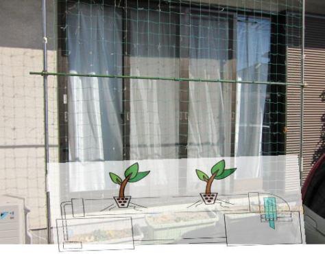 グリーンカーテンの水耕栽培計画