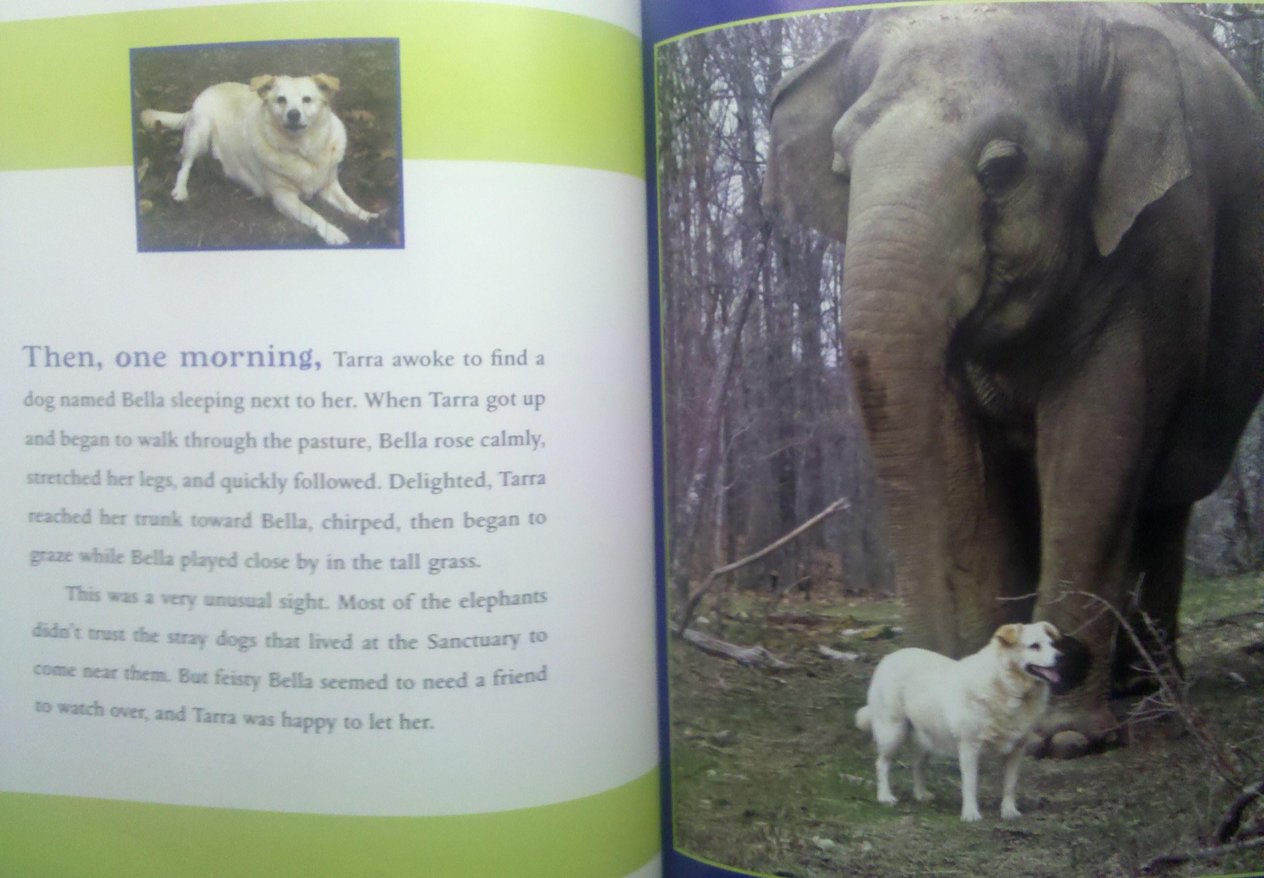 Book Review Elephant & Dog Friendship Children's Books & More