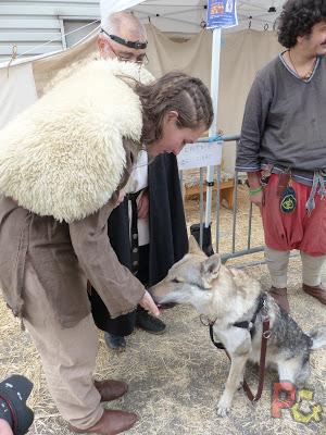 Loki le chien loup