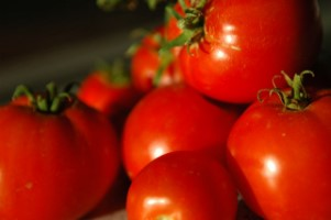 tomatoes for can article [320x200]
