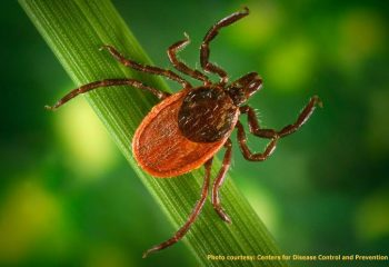 tick lyme disease