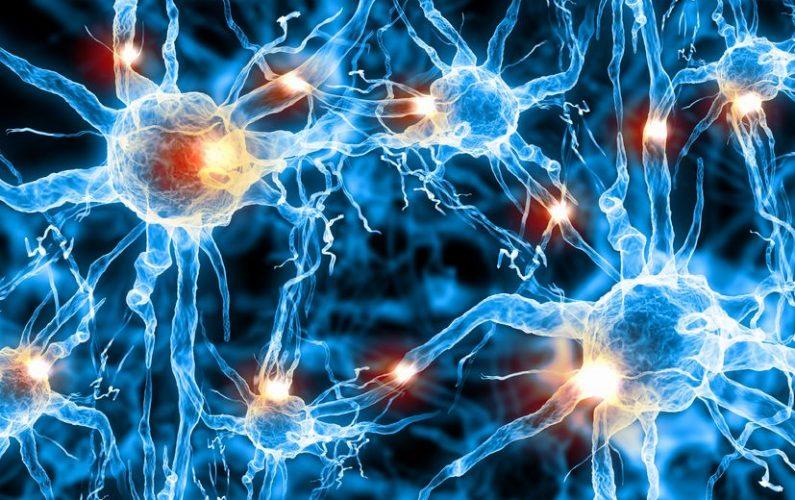 psychobiotics_brain_health