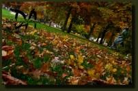 autumn leaves/Julianapark