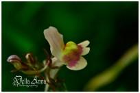 2015©DellaAnnaPhotography/wildflowers