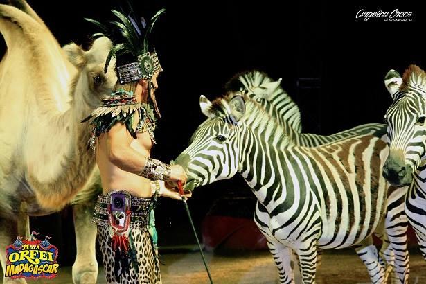 A San Benedetto del Tronto lo strepitoso show del Maya Orfei Circo Madagascar