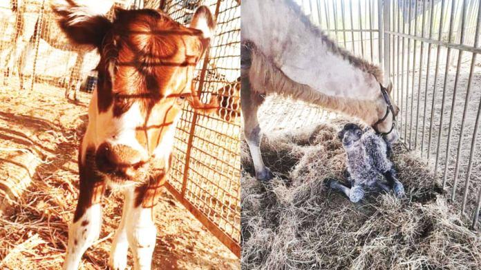 Gli animali al Circo stanno bene: la prova del nove
