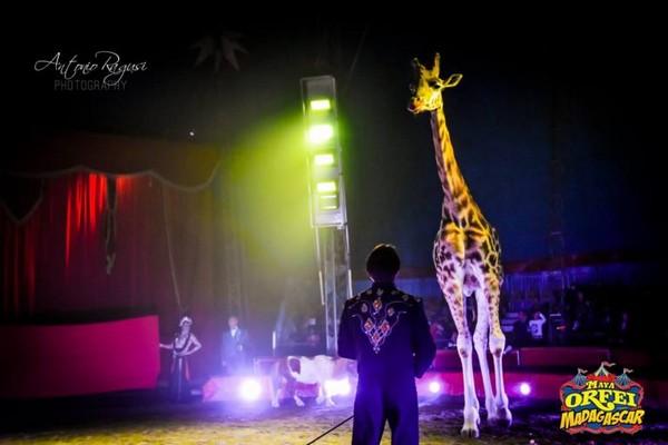 Il Maya Orfei Circo Madagascar a Santa Maria Imbaro