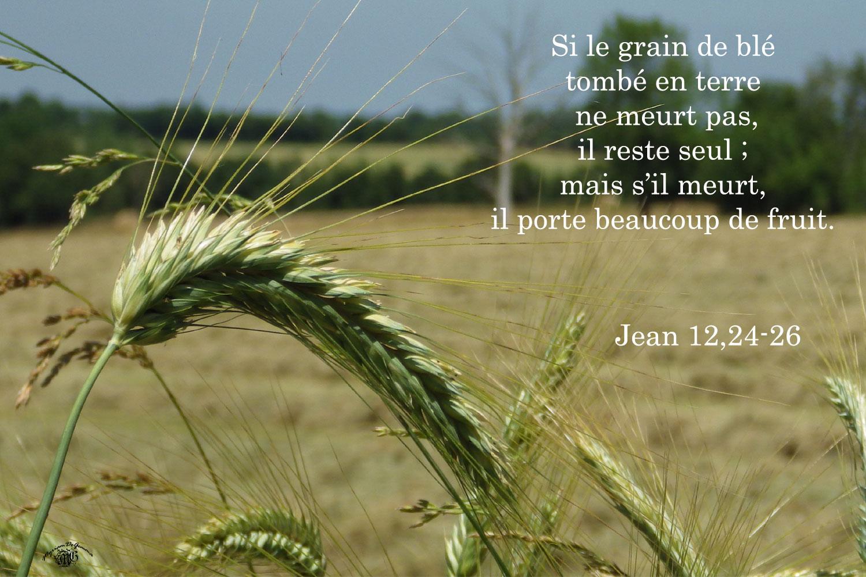 Commentaire de Jean 12,20-33