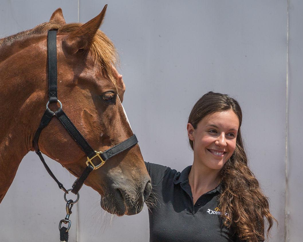 Les chevaux vedettes d'Odysseo de Cavalia sont arrivés à Montréal