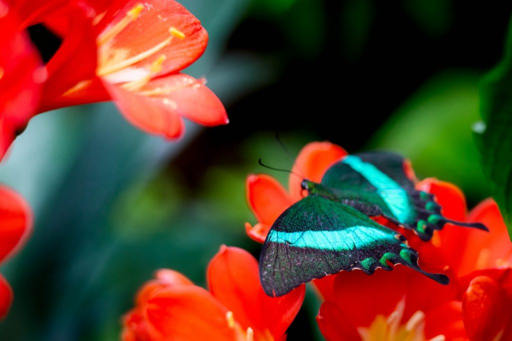 Papillons-en-liberte-a-montreal-10