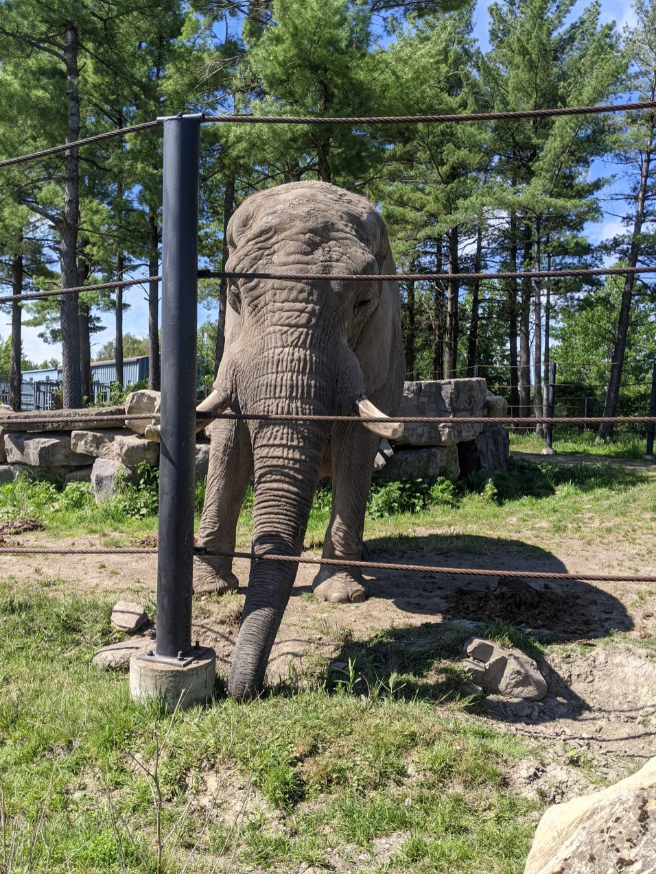 un-elephant-ca-trompe-photo