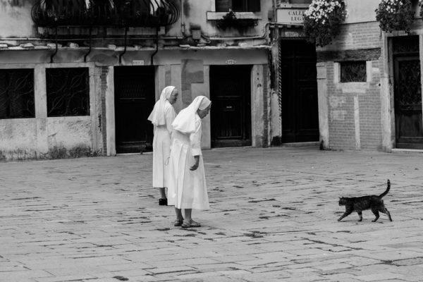 Nuns address a black cat in Venice
