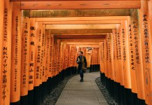 creative man walks under torii gates