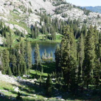 mountain lake nestled between trees