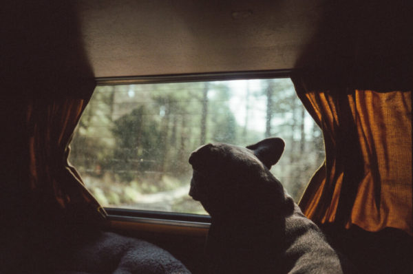 silhouette of dog looking out window in north wales countryside